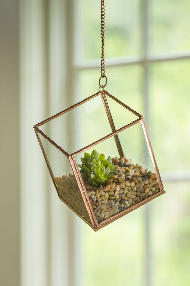 cube hanging terrarium glass terrarium plant terrarium garden pinterest walkways. Black Bedroom Furniture Sets. Home Design Ideas