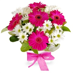Neon Cerise - A sensational gift box brimming with festive pink gerberas and pure white chrysanthemums, complemented with lush greenery.