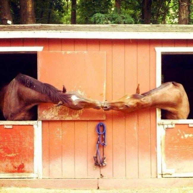 Nada é obstáculo para quem ama  e quer ficar perto!! Até os animais sabem disso ;)