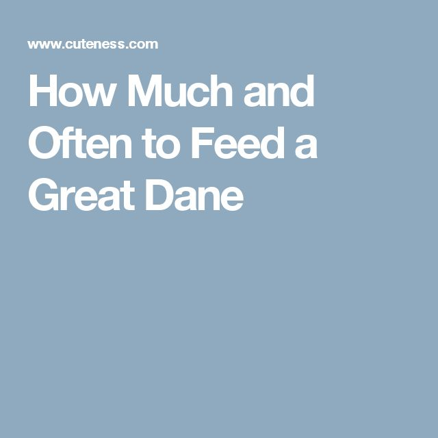 How Much and Often to Feed a Great Dane