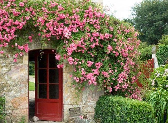 26 best Semences 2017 images on Pinterest Beautiful flowers