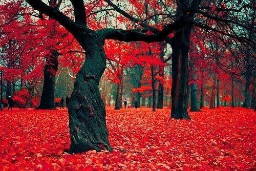 Crimson Forrest in Poland Forests cover over 30% of Poland's land area and the country is the fourth most forested in Europe.