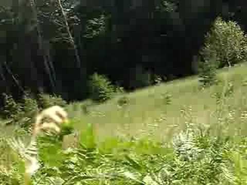 REAL BIGFOOT VIDEO!