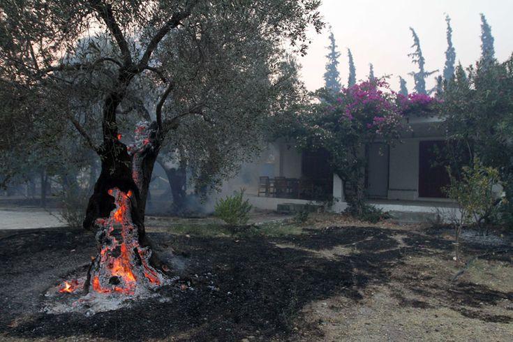 Βόρεια Εύβοια: Εκτός ελέγχου η πυρκαγιά - Οι νότιοι άνεμοι γλίτωσαν τα σπίτια