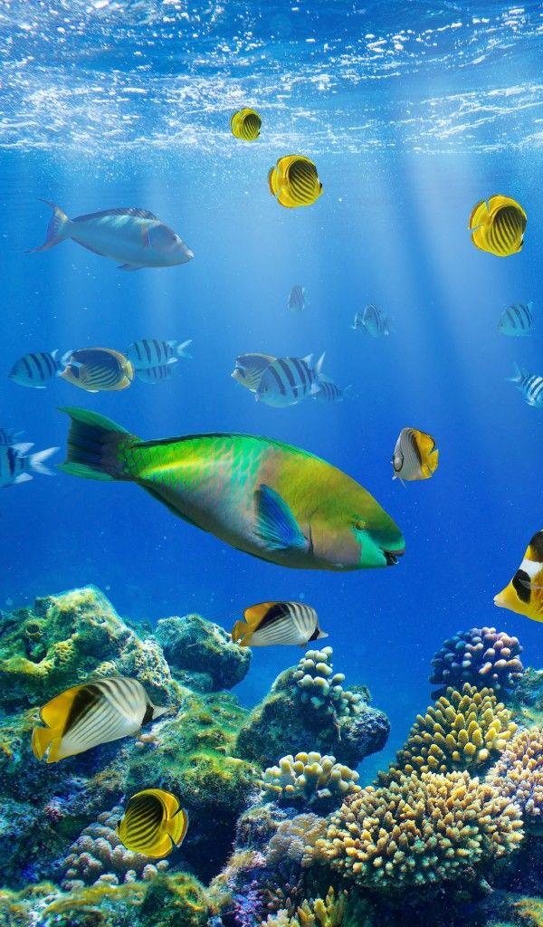 Wallpaper Tropical, Reef, Рыбки, Underwater, Океан ...