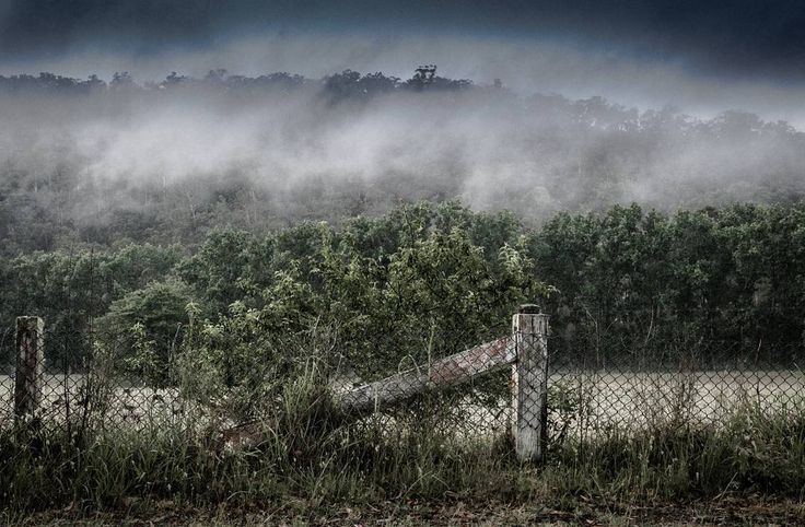 The rustic rural fence and morning fog across the top of the poplar plantation across the road from my cottage in Wisemans Ferry, New South Wales, Australia. I watched the cherry blossom change as the seasons came and went.  #landscapephotography #Australia #rural #rustic #fog #trees #newsouthwales #onethousandwordsorless