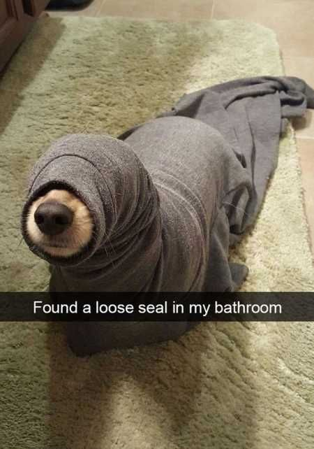 39 Pretty Hilarious Animal Pictures.