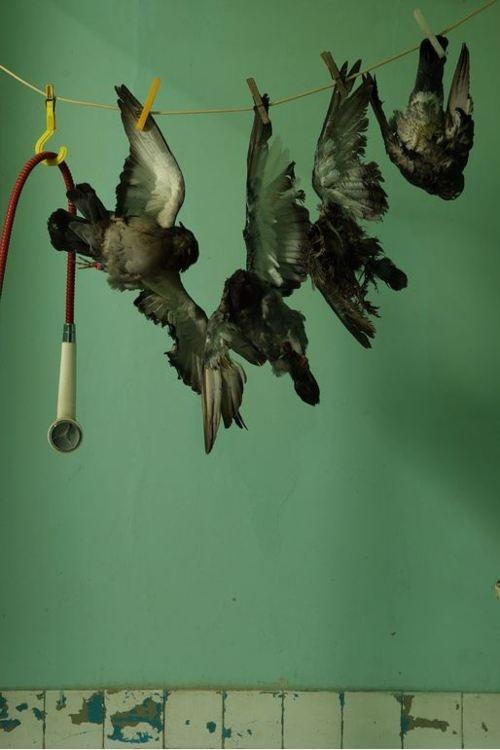 Shower For Dead Birds By Sacha Ketoff 2011 Bird Illustration Bird Taxidermy Bird Photography