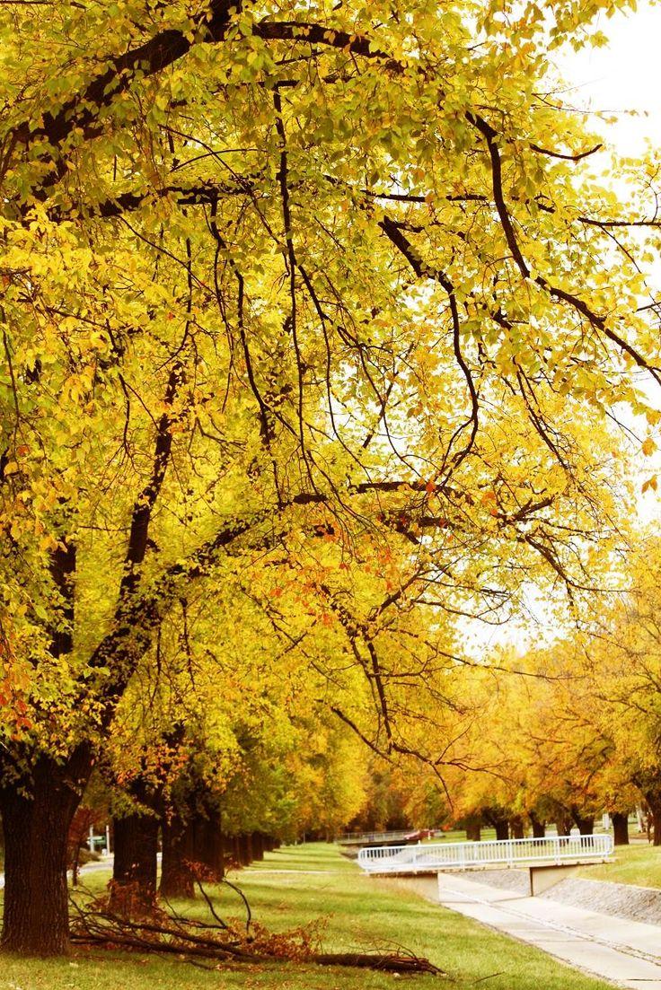Autumn - Fall - Thu - Canberra - ACT - Australia