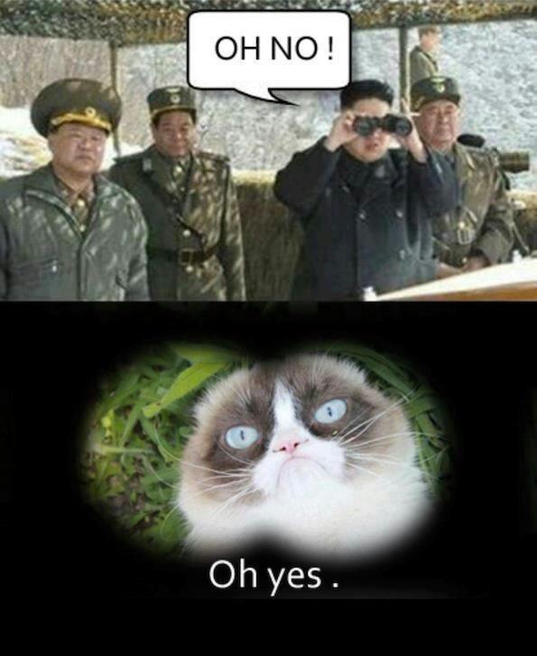 Yes Meme Cat 29 best Grumpy Cat quo...