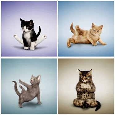 17 best images about cats doing yoga on pinterest  kitty
