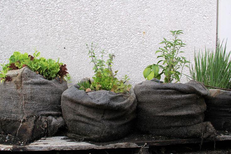 10x Urban Farming