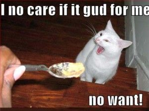 Best FUNNY FOOD Images On Pinterest - Meatball the fat cat kept eating everyones food so his owners came up with a clever solution
