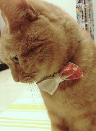DIY No-Sew Bow Tie for Dog, Cat, or Human | Maison Kuotidien