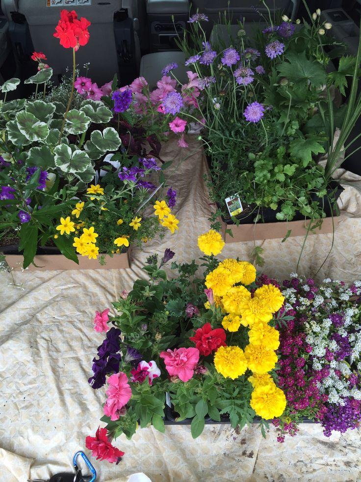 10 best My garden images on Pinterest Garden, Gardening and - gartenbeet steine anlegen