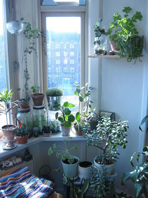 Houseplants for the dreary winter months. This is what my windowsills look like … Houseplants for the dreary winter months. This is what my windowsills [. Decoration Inspiration, Room Inspiration, Interior Inspiration, Home Interior, Interior And Exterior, Plantas Indoor, Image Deco, My Room, Houseplants
