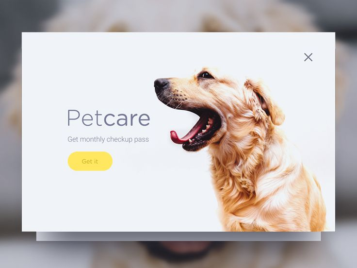 DailyUi - Day #16,  Hey guys, Today's challenge is to create a Pop-up. Made this one for my puppy Coco <3.   Check the Full view  Press L to show some love :)
