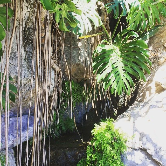 "#JardinExotique Waterfall of ""jardin exotique de Monaco""  #love #instagood #me #tbt #cute #photooftheday #instamood #iphonesia #picoftheday #igers #girl #tweegram #beautiful #instadaily #summer #instagramhub #follow #iphoneonly #bestoftheday #igdaily #happy #picstitch #webstagram #sky #jj #fashion #nofilter #followme #fun #smile by clem_48 from #Montecarlo #Monaco"