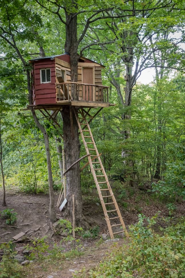 25 Awesome Kids Tree Houses Boomhut Kindertuin Tuin