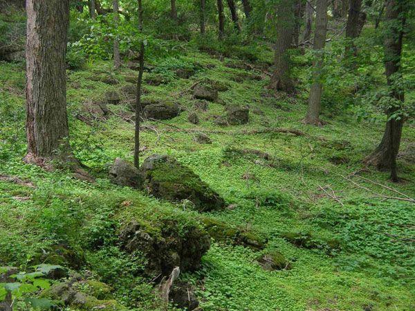 Beauty Of The Eramosa Karst Ecosystem / Forest