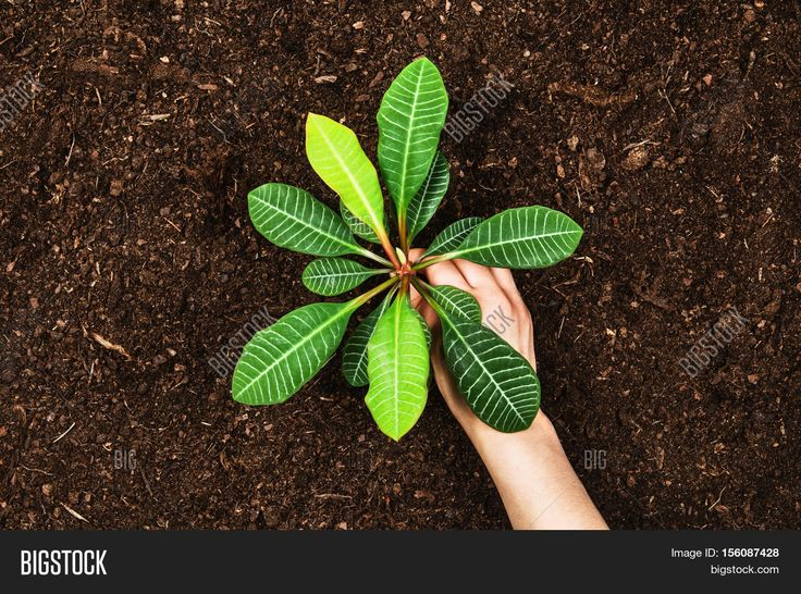 Planting a beautiful, green leaved plant on a natural, sandy backgroud. Camera from above, top view. Natural background for advertisements.