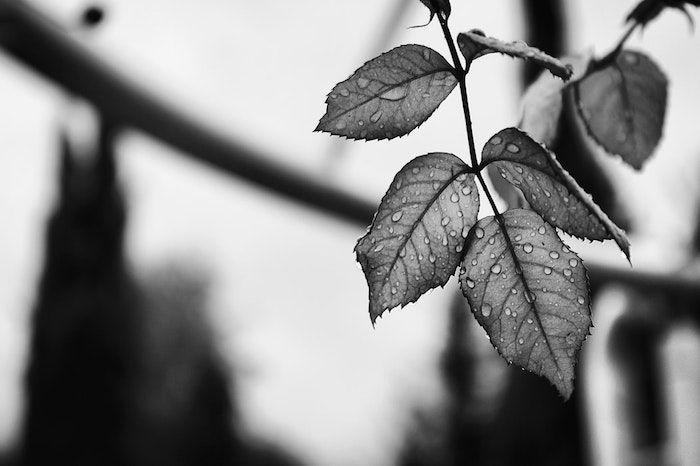 1001 Photos Pour Un Fond D Ecran Noir Et Blanc Parfait Pour Vous En 2020 Paysage Noir Et Blanc Portrait Noir Et Blanc Photographie Noir Et Blanc