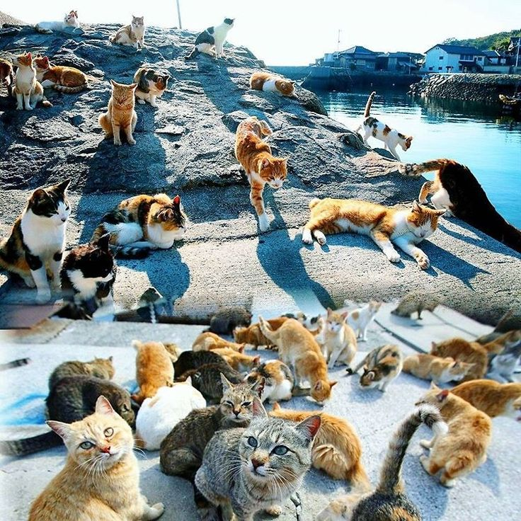 The 20 Weirdest Trips To Take Around The World - Cat Island in Japan. No