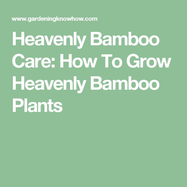 Heavenly Bamboo Care: How To Grow Heavenly Bamboo Plants