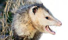 Critter Gitter - Thumbnail