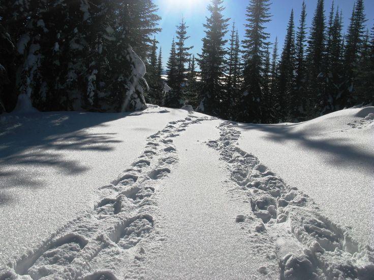 Sovereign Lake, Silver Star, Vernon BC Snowshoeing.