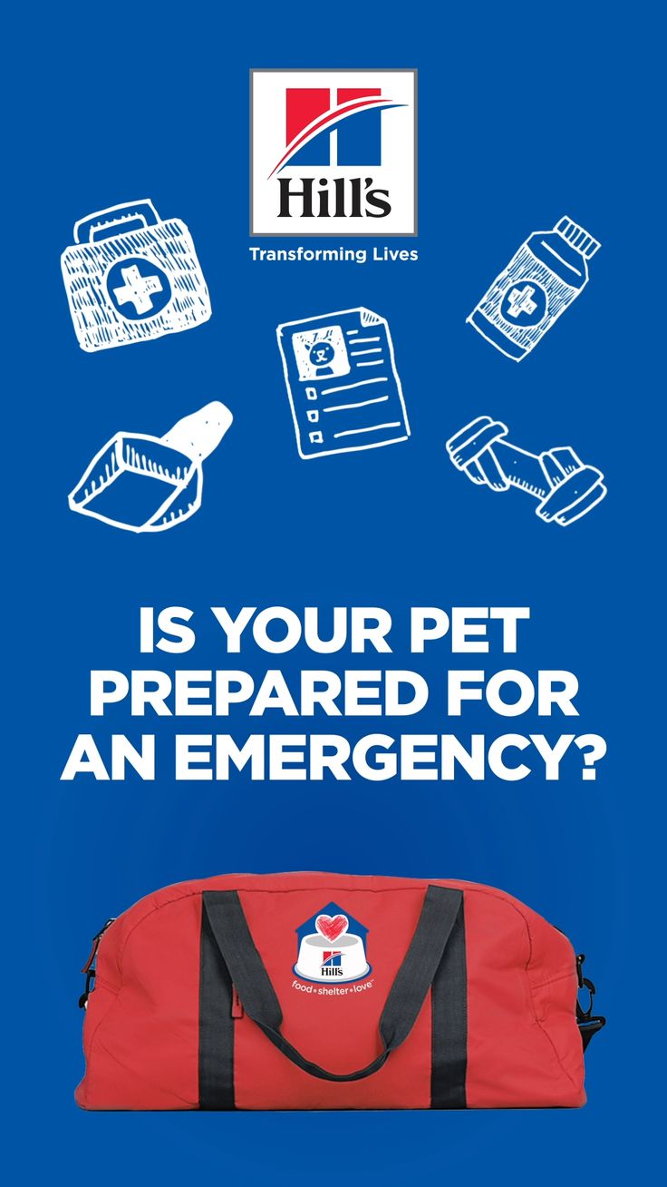 In honor of National Preparedness Month, here are some simple things you can do for your pet before an emergency. #PetPrepared #HillsTransformingLives