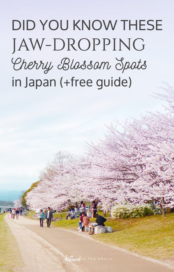 Tokyo isn't the only place with jaw-dropping cherry blossom spots. Here are some more with the perfect time to visit!