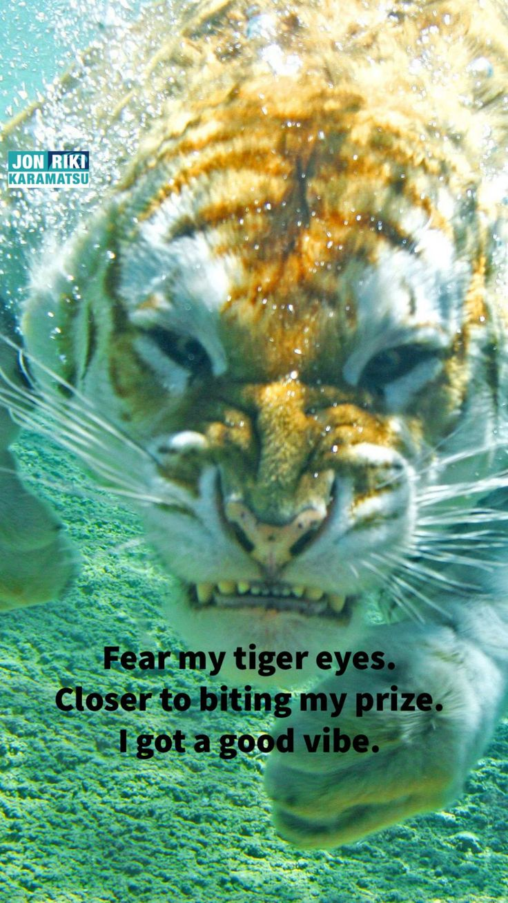 Fear my tiger eyes. Closer to biting my prize. I got a