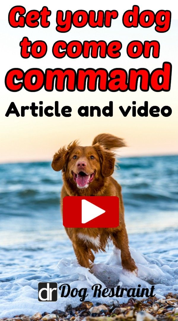 How To Teach A Dog To Come Without Treats Dog Clicker Training