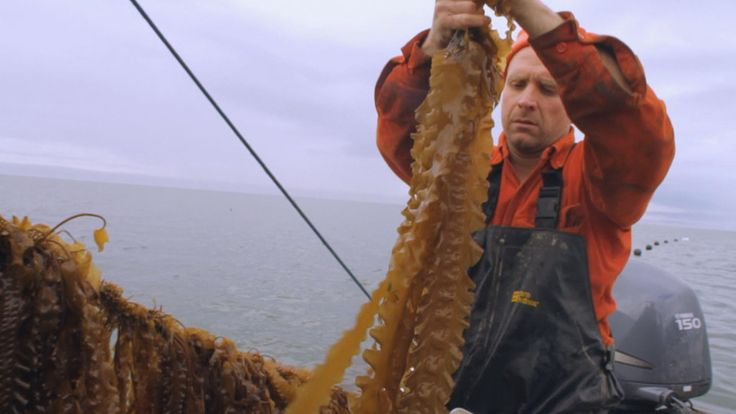 Bren Smith says kelp farming is a sustainable solution for fishermen and the environment