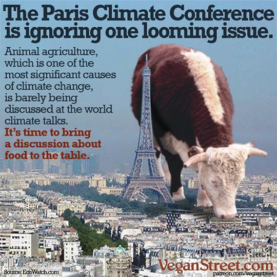 The Paris Climate Conference is ignoring one looming issue. Go vegan