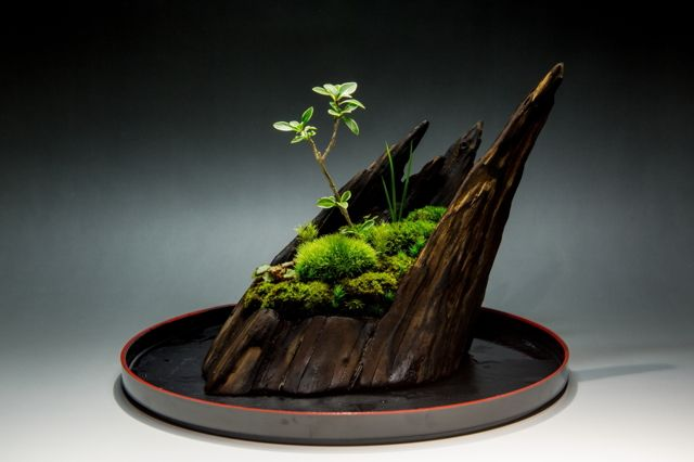 kachikohさんの作品「裏ワザ24 癒しの苔盆栽 里山の風景」(ID:3051371)のページです。撮影機材やExif情報も掲載しています。