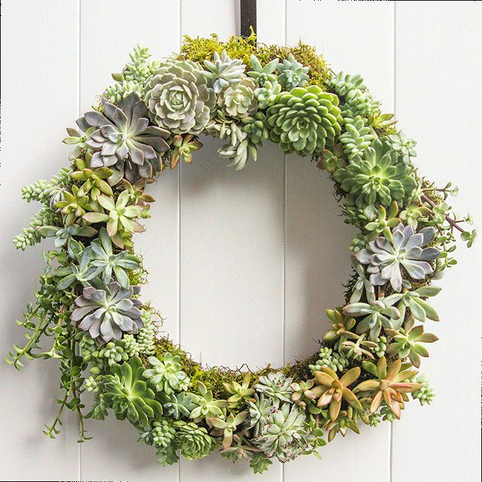 how-to-make-a-succulent-wreath-3
