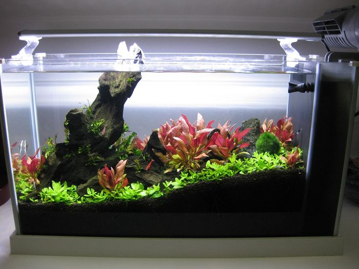 Fluval Edge Beleuchtung 24 Best Nano Aquariums Images On Pinterest | Nano Aquarium