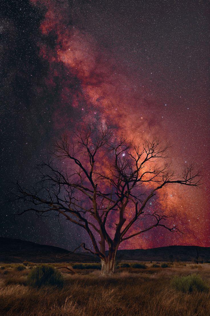 """opticxllyaroused: """" Stargazer by Peter Lik """""""