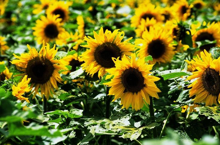52 Best Plant Movement Images On Pinterest Plants Carnivorous