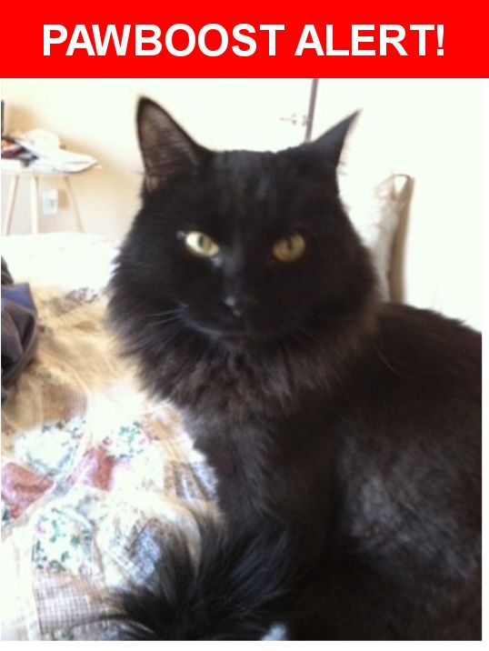 Please spread the word! Mojo was last seen in Nampa, ID 83687.  Description: Mojo is a neutered male, domestic long hair black cat. He gets shaved regularly and is about half way grown out now.  He's not wearing a collar and is not micro-chipped.   Nearest Address: 10422 Mckinley St, Nampa, ID, United States