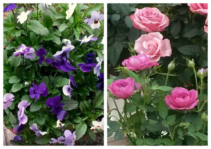 Kesäiseen puutarhaan värejä ja kukkien tuoksua.