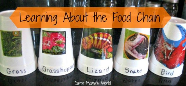 Tadpoles, Frogs, And Crickets: Learning About The Food Chain | Earth Mama's World