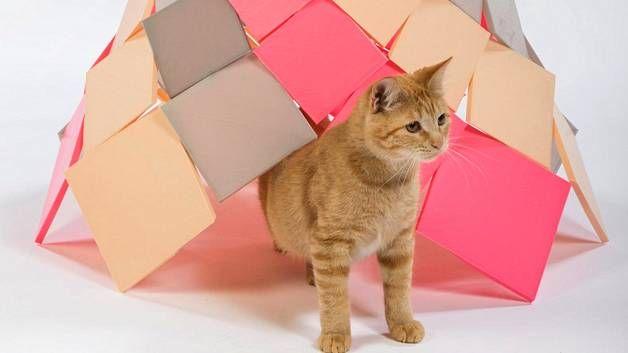 Architects for Animals-organisaatio järjesti kodittomien kissojen hyväksi tapahtuman, jossa 12 kutsuttua muotoilijaa ja arkkitehtiä sai tehtävän suunnitella kissalle pesä tai mielenkiintoinen objekti.