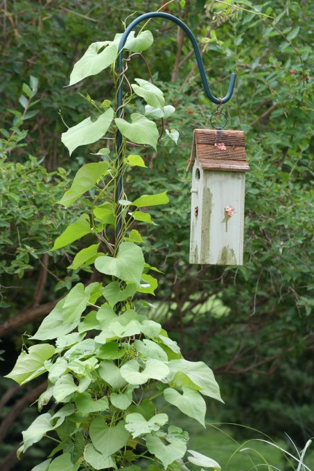 Wonderful for creating a high focal point in the garden, a Shepherd's hook for climbing vines with a bird house (or feeder!)