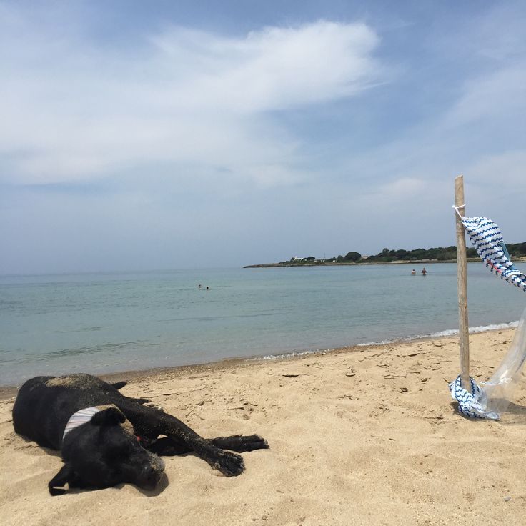 Mushi melting moments by the seaside