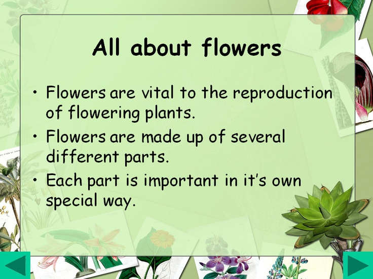 All about flowers: Lots of visual information and simple text. Looks at the parts of a plant, parts of a flower and pollination