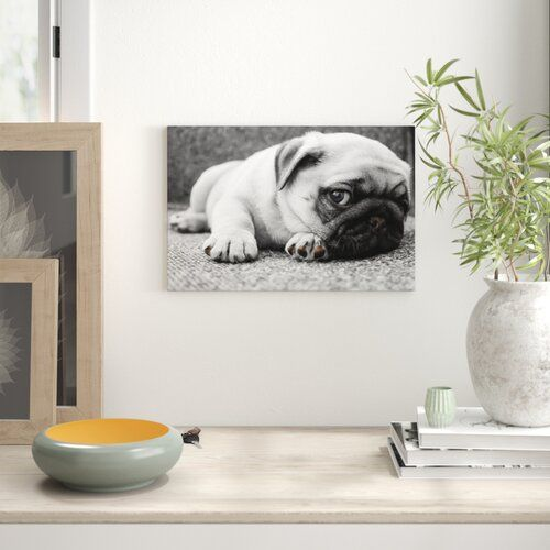 Cute Pug Puppy On A Rug Graphic Art On Canvas Pixxprint Size 80