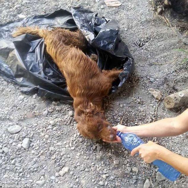 Dog Rescue Costa Blanca